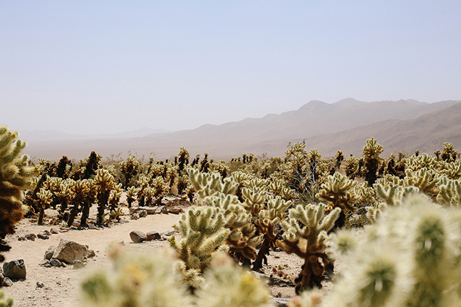 ashleigh-leech-someform-cholla-cactus-joshua-tree-07