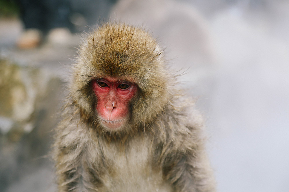 ashleigh-leech-someform-jigokudani-monkey-park-nagano-japan-01