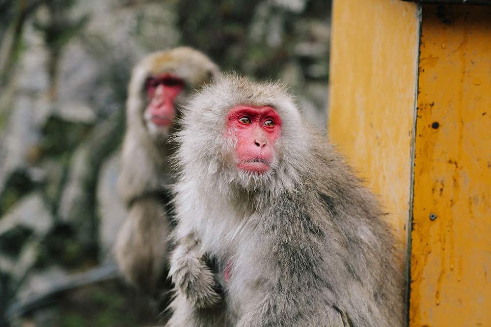 ashleigh-leech-someform-jigokudani-monkey-park-nagano-japan-02