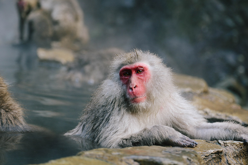 ashleigh-leech-someform-jigokudani-monkey-park-nagano-japan-03
