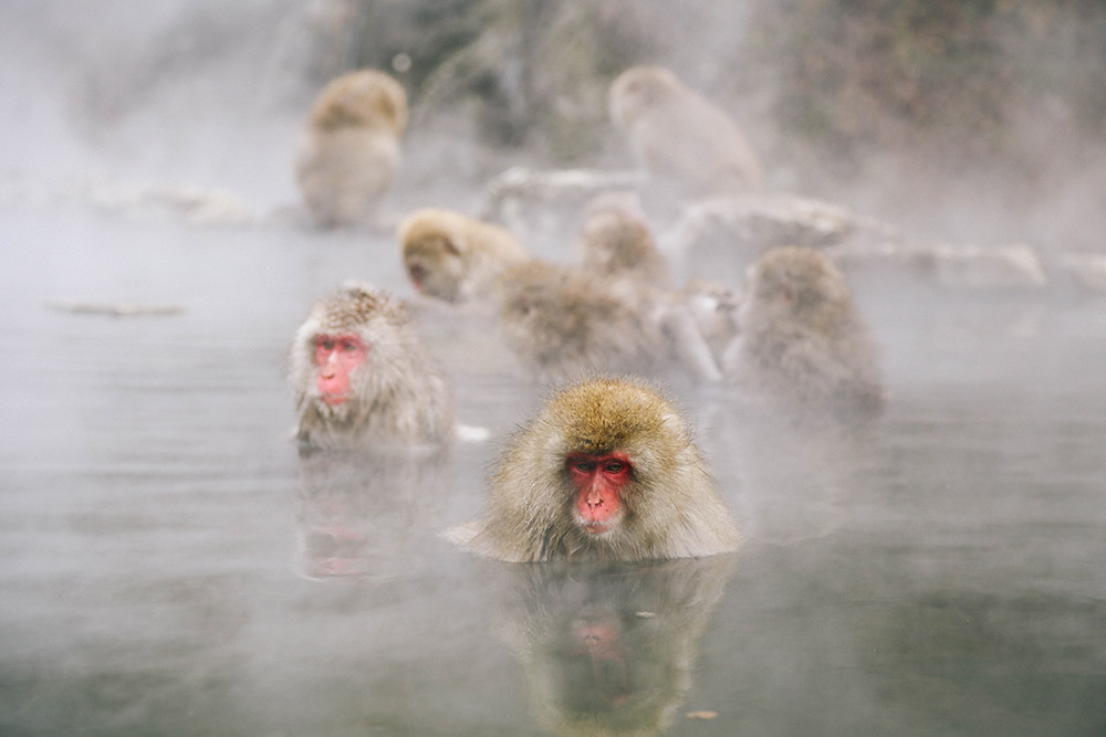 ashleigh-leech-someform-jigokudani-monkey-park-nagano-japan-04