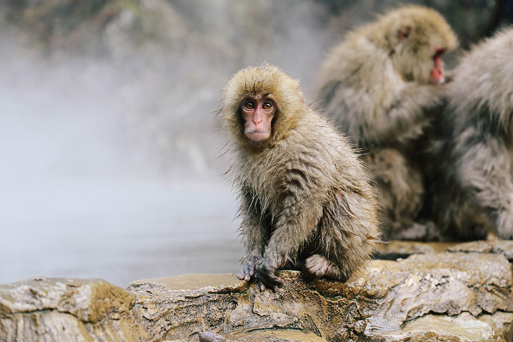 ashleigh-leech-someform-jigokudani-monkey-park-nagano-japan-05