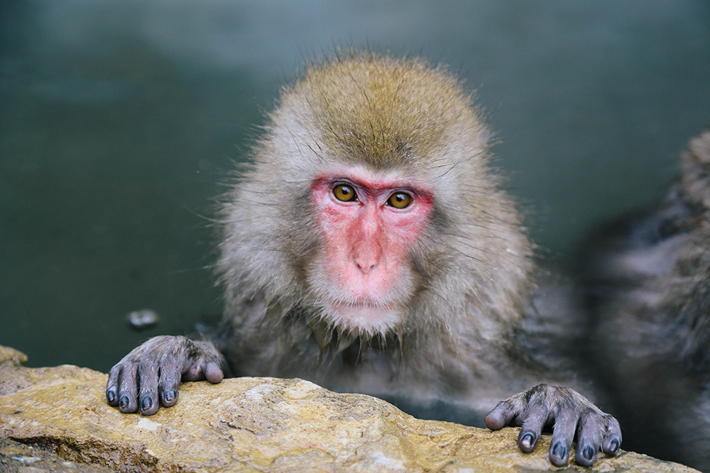 ashleigh-leech-someform-jigokudani-monkey-park-nagano-japan-06