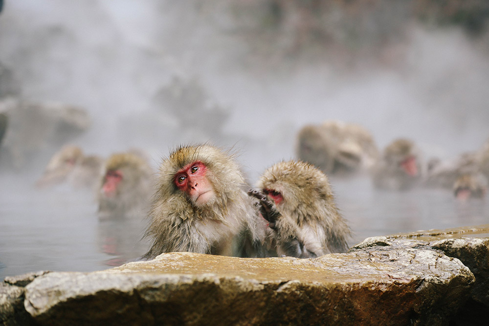 ashleigh-leech-someform-jigokudani-monkey-park-nagano-japan-07
