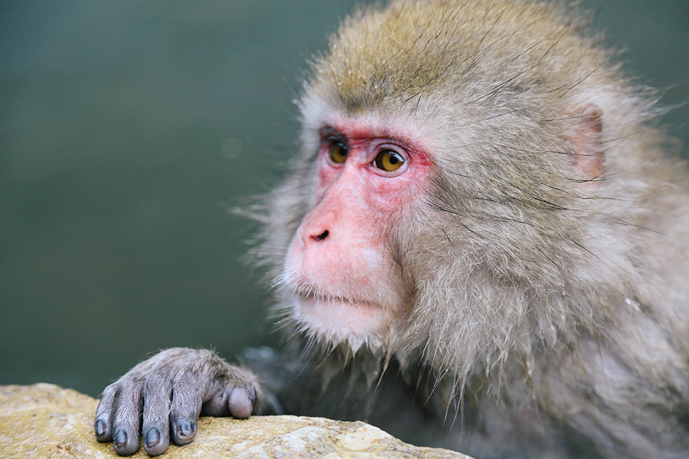 ashleigh-leech-someform-jigokudani-monkey-park-nagano-japan-08