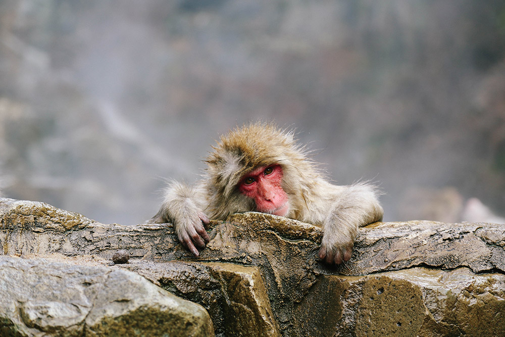 ashleigh-leech-someform-jigokudani-monkey-park-nagano-japan-11