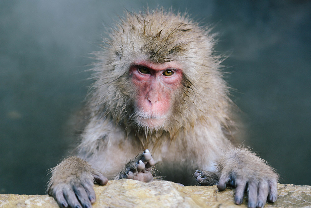 ashleigh-leech-someform-jigokudani-monkey-park-nagano-japan-12