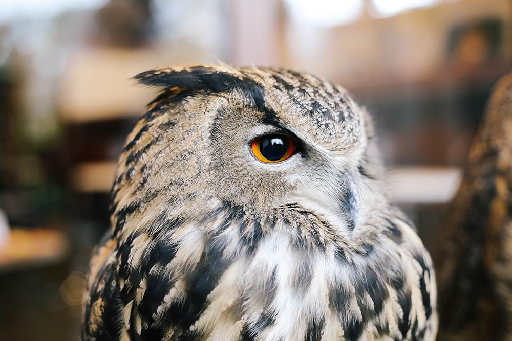 ashleigh-leech-someform-owl-cafe-village-tokyo-japan-04