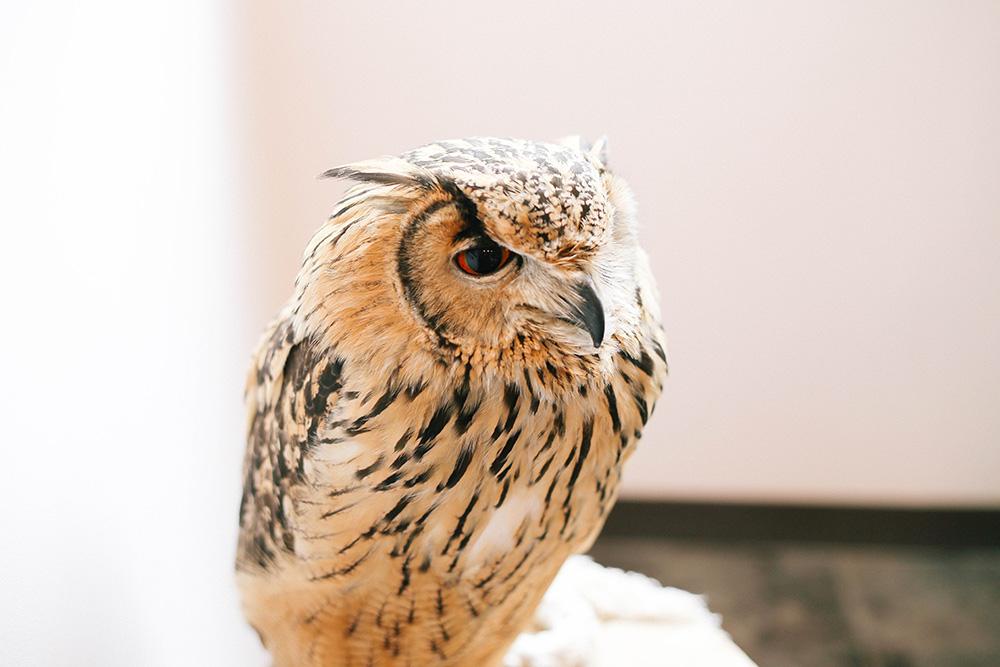 ashleigh-leech-someform-owl-cafe-village-tokyo-japan-06