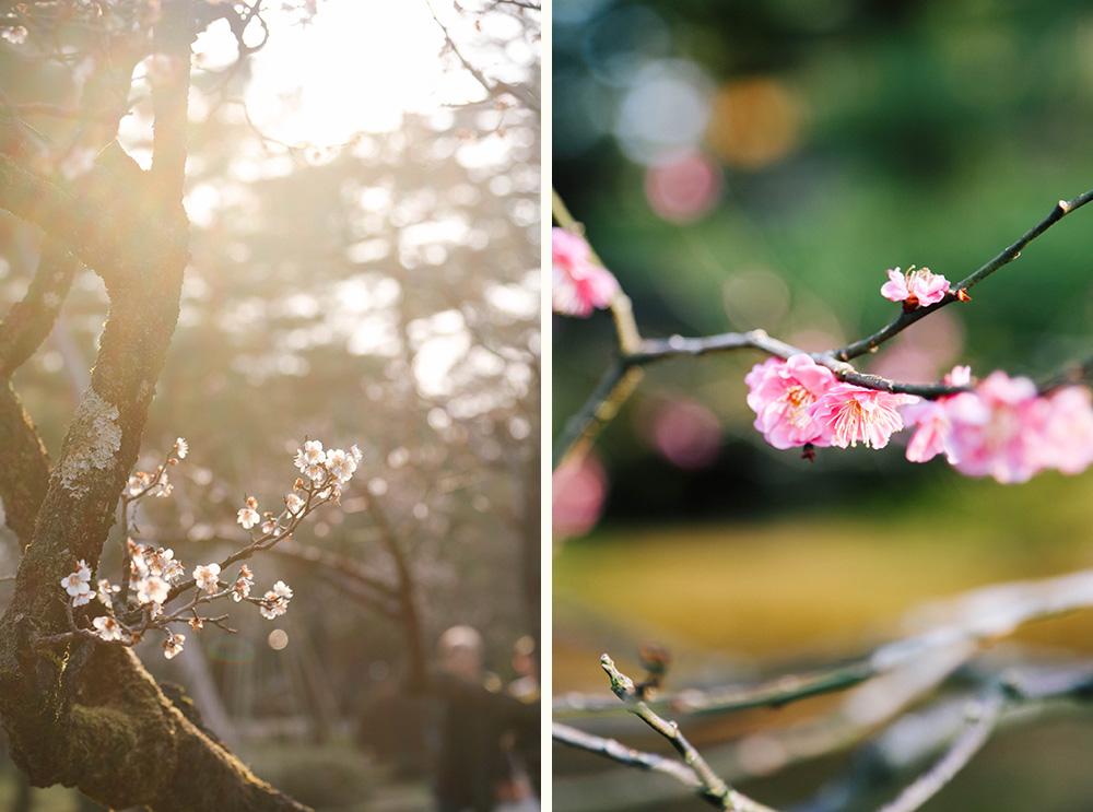 ashleigh-leech-someform-bloom-kenrokuen-gardens-kanazawa-japan