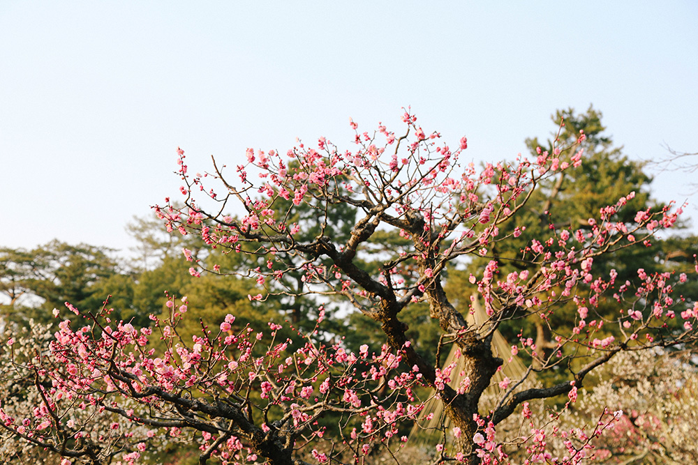 ashleigh-leech-someform-kanazawa-weekend-japan-16