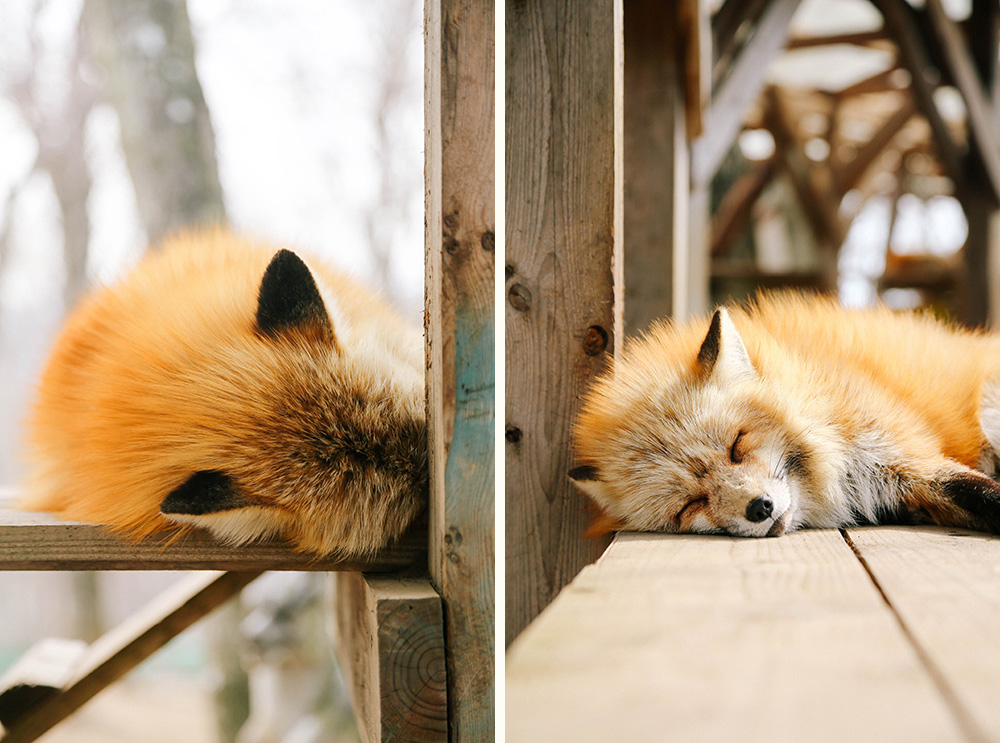 ashleigh-leech-someform-shiroishi-zao-fox-kisune-village-japan-04